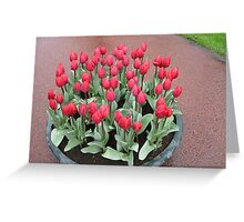 Bathtime for Tulips! Greeting Card