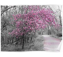 Tree in Pink Poster