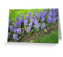 Beautiful Blue Hyacinths - Keukenhof Gardens Greeting Card