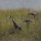 Sandhill Crane Family in Texture by Rosalie Scanlon