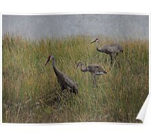 Sandhill Crane Family in Texture Poster