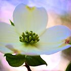 Portrait of a Dogwood by Jeff Johannsen