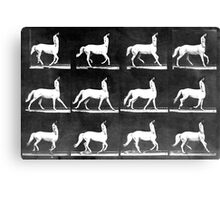 A Study of the Movement of Centaurs (Canter). Canvas Print