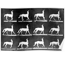 A Study of the Movement of Centaurs (Canter). Poster