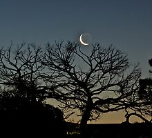 Tickling the Moon Tree by Helen Vercoe