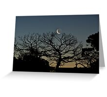 Tickling the Moon Tree Greeting Card