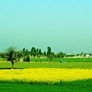 Punjab by Dr. Harmeet Singh