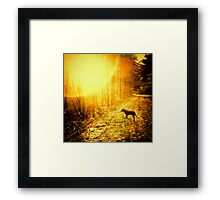 Kirby & The Sun Framed Print