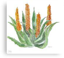Aloe ferox sketch Canvas Print