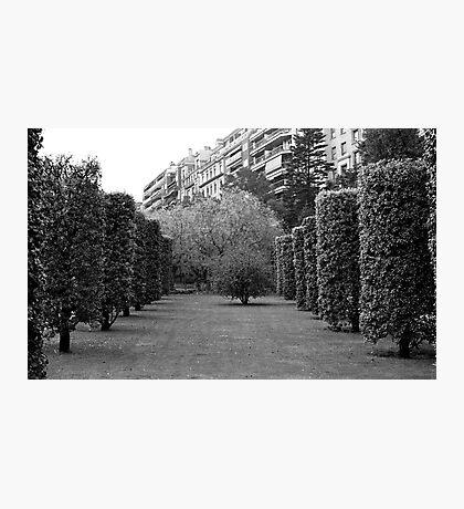 Turo Park View Photographic Print