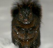 A Snow squirrel.... by Larry Llewellyn