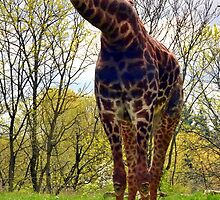 WHAT YOU LOOKIN' AT GIRAFFE by Darla Fitzgerald