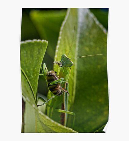 Munching Mantis Poster