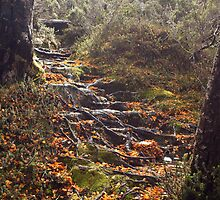 Natures Garden Path by Kylie  Sheahen