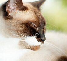 Sleepy Puss by Jenny Dean