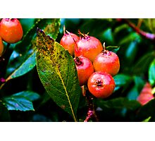 5 BERRIES Photographic Print