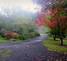 Autumn mist by Rosalie Dale