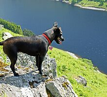 The Hound Of Haweswater by Jamie  Green