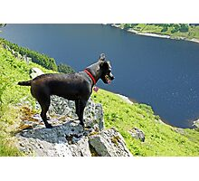 The Hound Of Haweswater Photographic Print