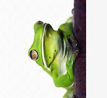 Froggie iphone/ipod case by Jenny Dean