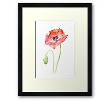 Red Poppy Watercolor Floral Painting  Framed Print