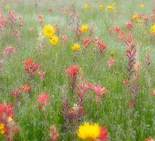 Spring Colors by Carolyn  Fletcher