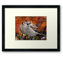 A LOVELY PAIR OF SPARROWS Framed Print