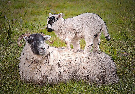 Mother & Lamb by M.S. Photography/Art