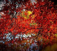 Autumn Blush by Lozzar Landscape