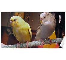 New Parakeets in the Family Poster