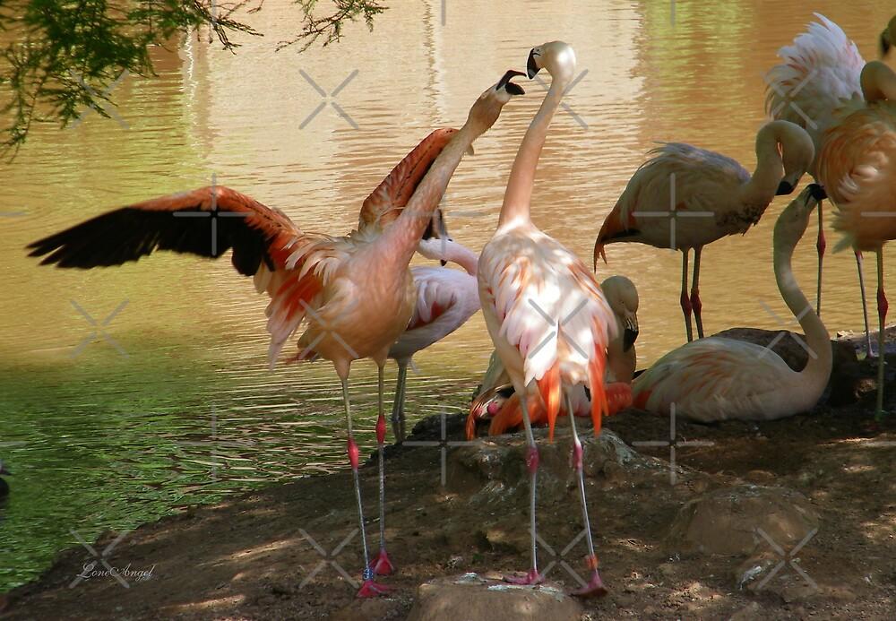 Flamingo Dispute by LoneAngel
