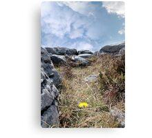 burren yellow flower plant life Canvas Print
