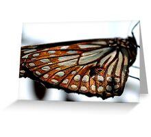 Butterflies in Calcutta, India  Greeting Card