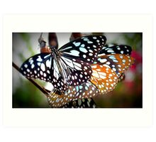 Beautiful Butterflies in Calcutta, India  Art Print
