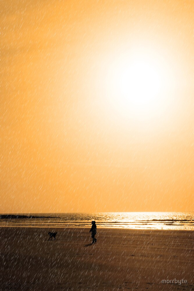 child and dog walking in golden sun shower by morrbyte