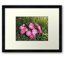 Alberta Red Rose Framed Print