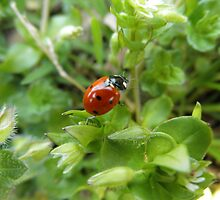 Lady Bug by ack1128