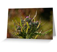 Cirsium vulgare Greeting Card