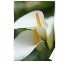 Tranquil orchids Poster