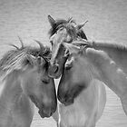 Wild Horses 3 by Henri Ton