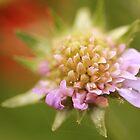 Flower Power by jamesnortondslr