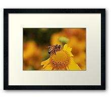 What can i find here Framed Print