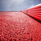 Definitely Red by Bob Larson