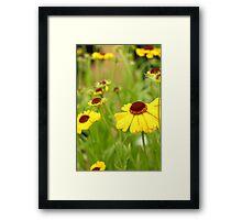 Yellow flowered field Framed Print