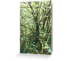 Silent tree Greeting Card