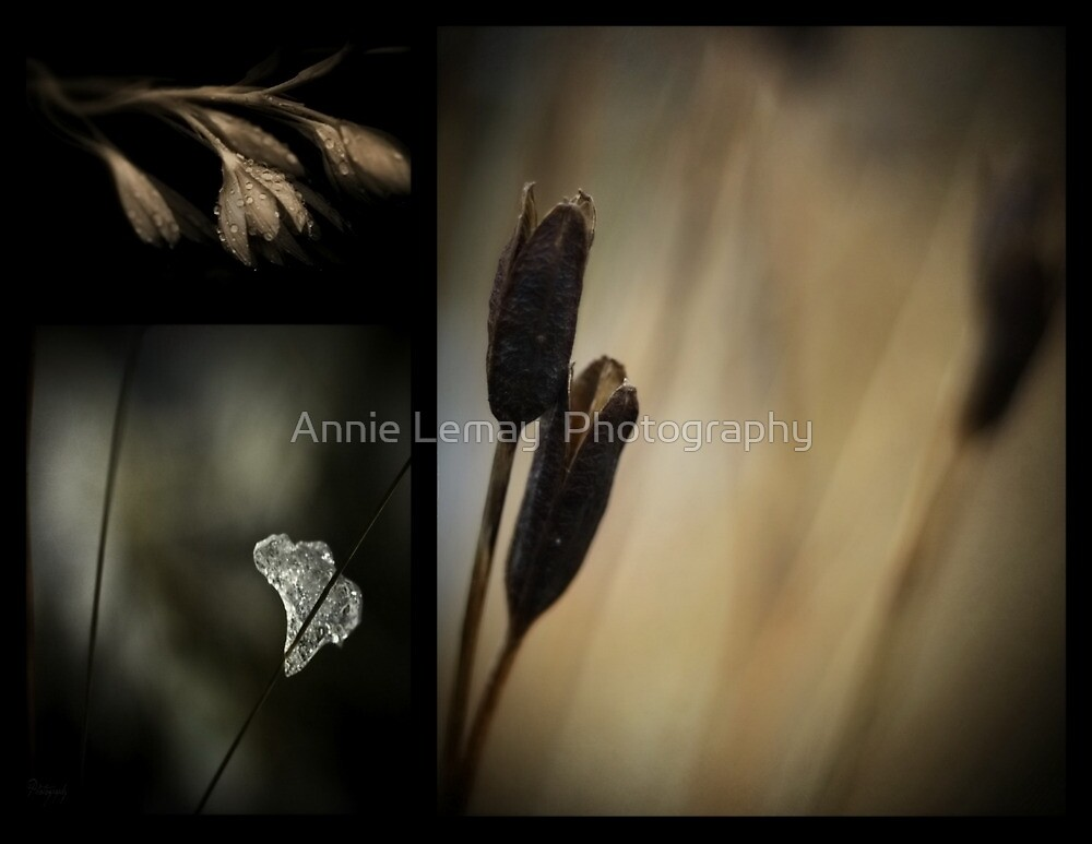 Let There be Light  by Annie Lemay  Photography