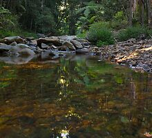 Forest Reflections by Odille Esmonde-Morgan