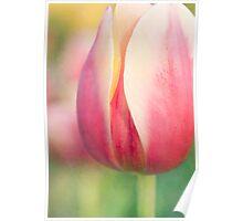 Pastel Tulip Poster
