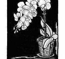 Phalaenopsis by aniOriginals