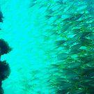 Fishy Fishy by CandiceRose